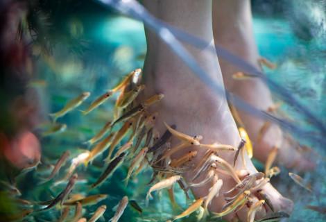Žuvyčių SPA pėdoms + klasikinis pedikiūras su lakavimu