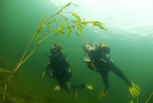 Pažintinis nėrimas su povandenine fotosesija Platelių ežere dviem