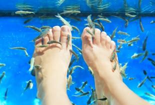 Karališkoji Talaso terapija kojoms + Kangalo žuvelių pedikiūras