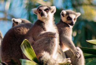 Karaimiškų vaišių degustacija su apsilankymu zooparke (3 asmenims)