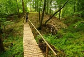 Orientacinės varžybos po Dzūkijos miškus